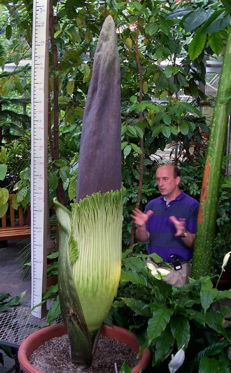 corpse flower 10 funny and strange plant names