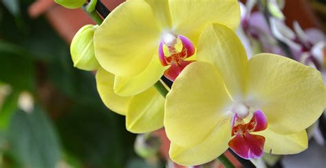 ask wet forget 5 tips to taking care of orchids in your home ask wet forget