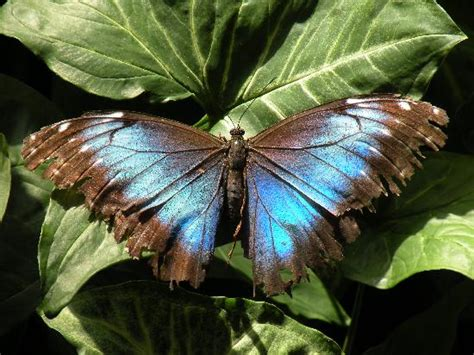 butterfly house sioux falls on a leaf picture of sertoma butterfly house sioux falls tripadvisor