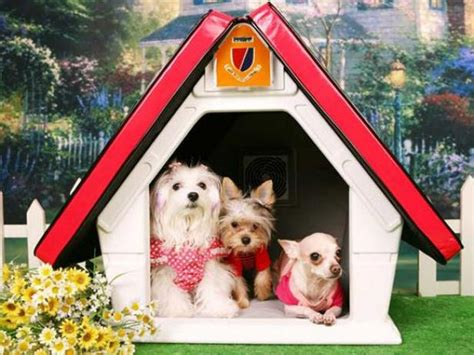 high tech dog house 10 high tech modern doghouse designs diy shed pergola fence deck more outdoor