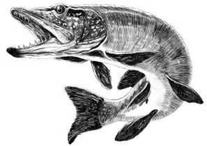 muskie fish drawing