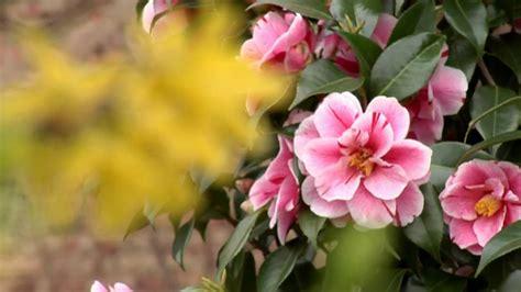 fiori hd fiori di primavera hd 1440x1080 test panasonic p2