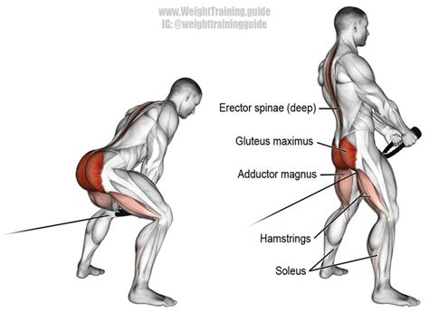 65 best leg and glute exercises images on