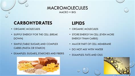 carbohydrates 7th grade science diffusion and osmosis 7th grade science ppt