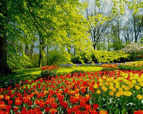fiori dei ci ewwiwa i peones co di fiori