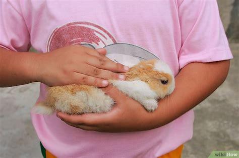 bagno coniglio come fare il bagno al tuo coniglietto 5 passaggi