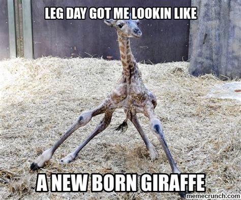 Leg Day Meme - leg day meme