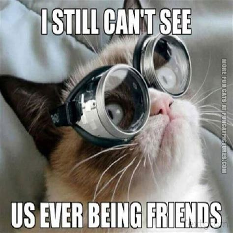 Glasses Meme - glasses doesn t help grumpy fun cat pictures