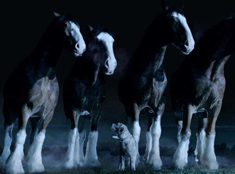 budweiser puppy commercial budweiser puppy faces a wolf in lost bowl xlix ad can the clydesdales save