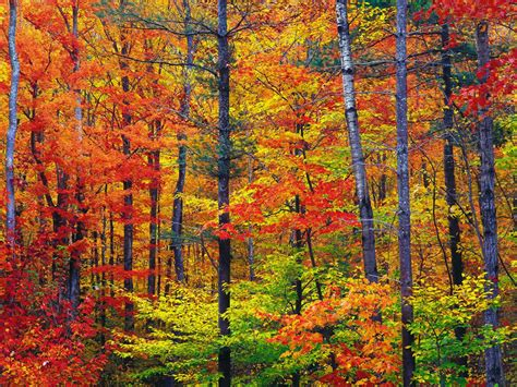new fall colors america the beautiful in autumn peak fall foliage dates