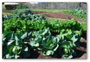 Vegetable Gardening For Dummies Or How To Grow A Vegetable Gardening For Dummies