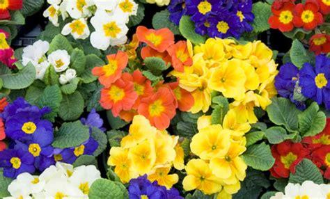 nomi di fiori primaverili fiori che annunciano la primavera ecco quali sono leitv