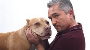 Pics photos cesar millan and his dog daddy the pitbull