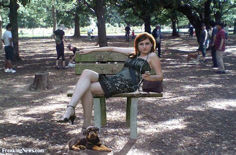 dog park benches funny singles pictures freaking news