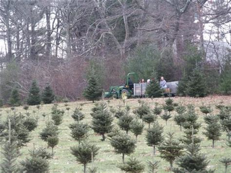 christmas tree farms in massachusetts tree berry farm 12 harbor view rd scituate ma location hours and website