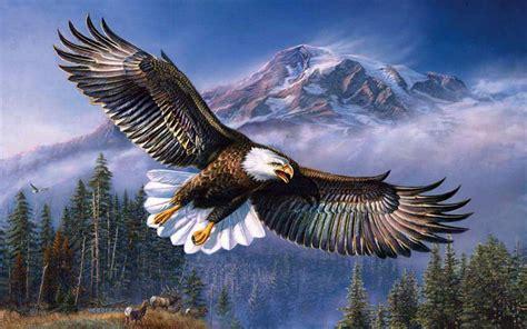 tmobile inflight beautiful background bald eagle in flight wings spread hd