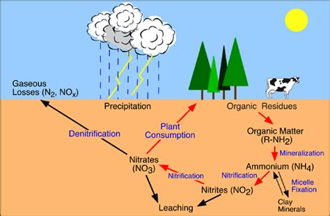 carbohydrates webquest cycles of matter biology