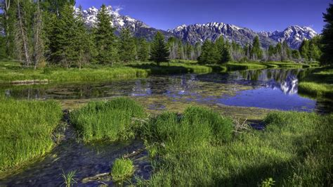 landscape mountain river green grass forest trees stone hd