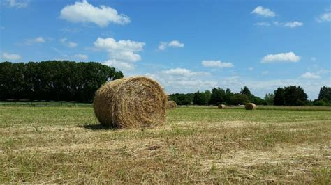 suche zweifamilienhaus zum kauf suche weideland zum kauf zur pacht agrarimmobilien