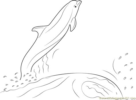 coloring pages dolphins jumping dolphin jumping out of the water coloring page free