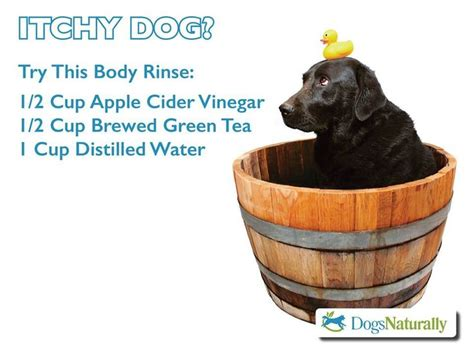 remedies for itchy dogs itchy remedy my pet
