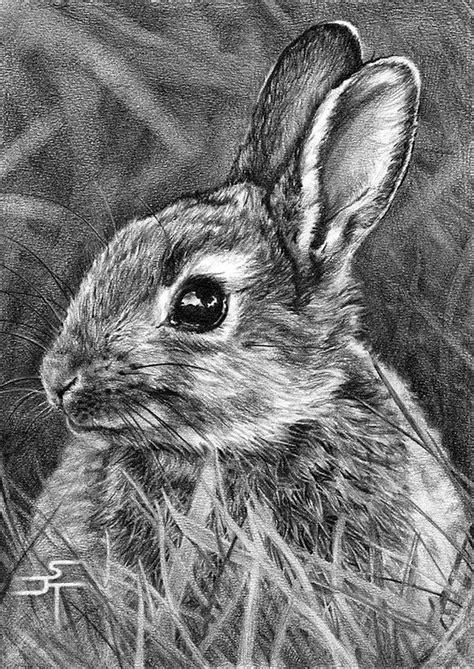 drawn rabbit baby animal pencil   color drawn