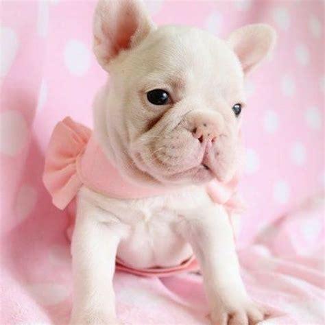 imagenes de animales faras 96 mejores im 225 genes sobre imagen de perros en pinterest