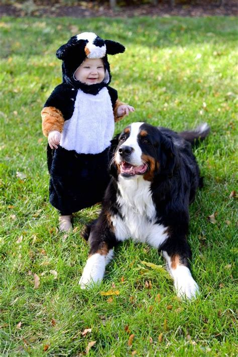 bernese mountain names bernese mountain breed fallinpets