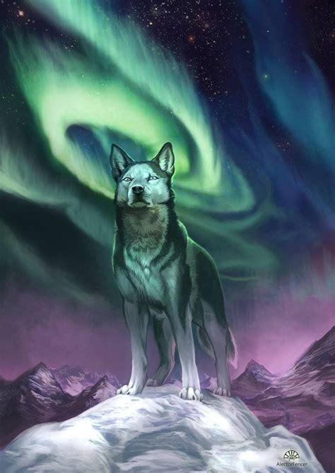 northern lights siberian husky rescue siberian w borealis northern lights boston