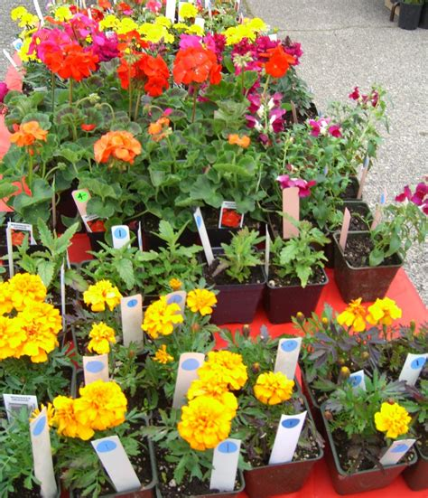 Flowers For Sale by Garden Flowers For Sale Plant Sale Rows Of Flowers For