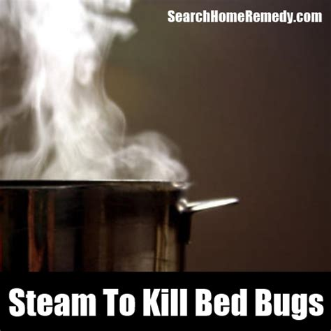 steaming bed bugs kill bed bugs with steam how to get rid of bed bugs at