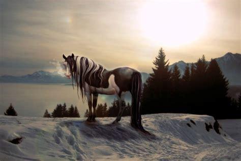 imagenes en blanco y negro de caballos un hermoso caballo blanco y negro 15931