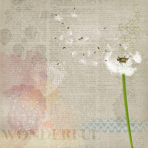 free illustration background dandelion plant free
