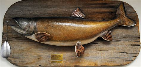 Maine Records Search Maine State Record Lake Trout Maine S Sebago Lake Cumberland County Fishing Derby