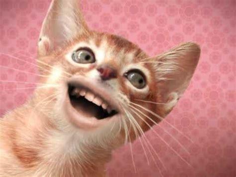 cat singing singing cats