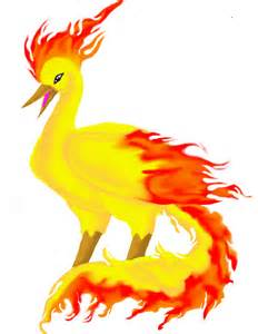 Moltres By Animal And Anime Lvr On Deviantart