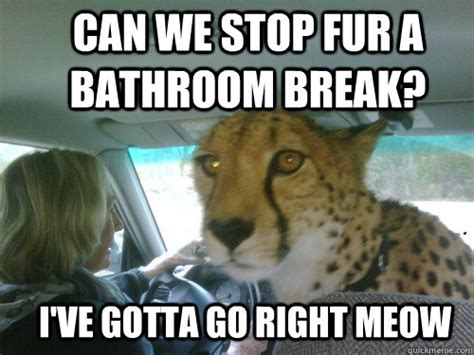 gotta go bathroom chill cheetah memes quickmeme
