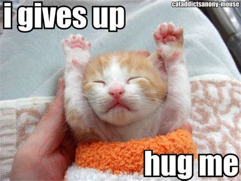 Cat Hug Meme - i need hugs cat meme foto bugil bokep 2017