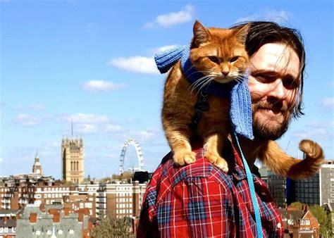libro un gato y un un gato callejero llamado bob cinco razones para leerlo