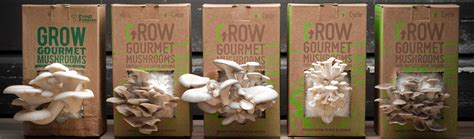 Box House Plans by Grow Mushrooms On Coffee Grounds How A Grocycle Mushroom