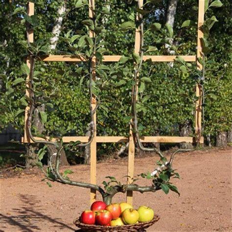 imagenes de jardines hermosos pequeños frutales en espaldera para jardines peque 241 os paperblog
