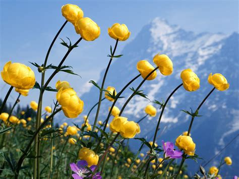 cute hd wallpaper of flowers wnp wallpapers pictures february 2013