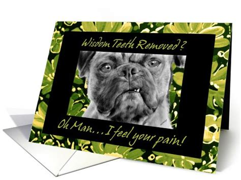 pug teeth extraction wisdom teeth removal get well card with pug card 657991
