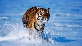 Wild Animal Wallpapers Wallpaper Cave