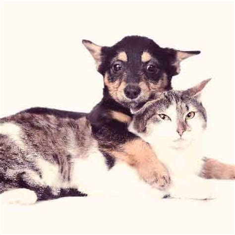 fanconi dogs fanconi in dogs and cats petcarerx