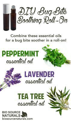 essential oils for bed bug bites 1000 ideas about bug bite on pinterest bed bugs bug