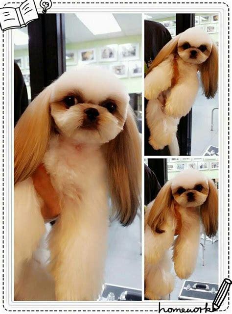 talk fusion on pinterest 16 pins pin by rocio brindiz on asian fusion dog grooming