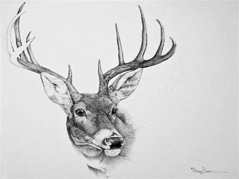 how to a deer realistic deer drawings drawings of a deer how to draw a realistic deer draw real deer