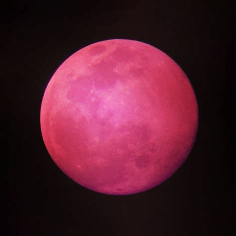 pink moon pink moon images search