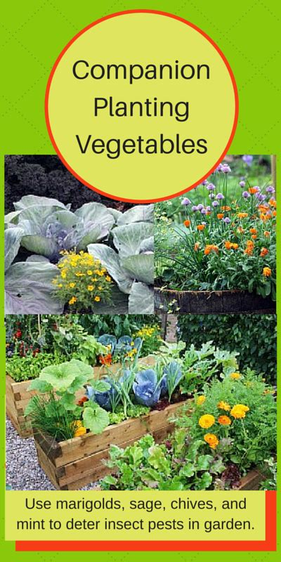 Companion Plants Vegetable Garden Companion Planting Of Vegetables